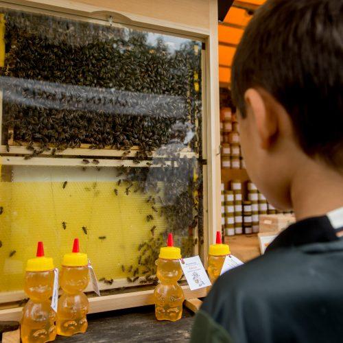 und manchmal zeigt der Imker, wie der Honig entsteht.