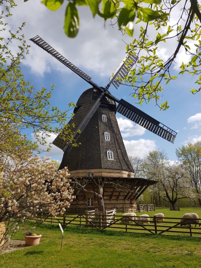 Frühling an der Britzer Mühle